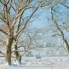 Sneeuw_takken MAY 4410_2_HDR2