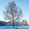 Sneeuw_Boom_MAY4350_2_HDR2