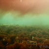 Rode alg wolk