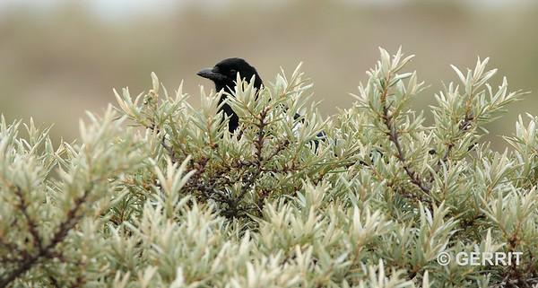 Een dagje struinen door het nationaal park Kennemerduinen