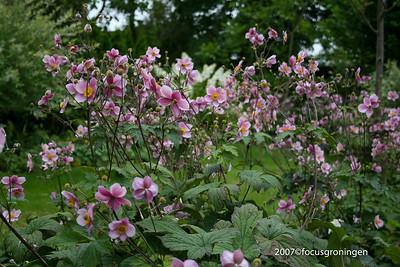 natuur, bloemen en planten