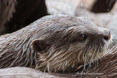 Dieren Otters