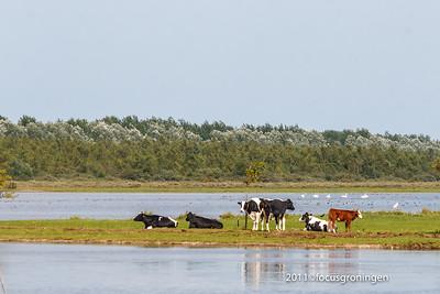 nederland 2011, lauwersoog, lauwersmeer