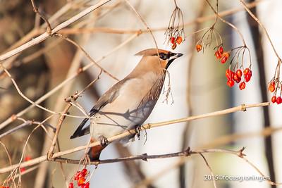 natuur, vogels