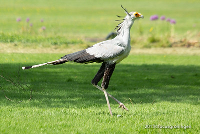 Vogels Trappen