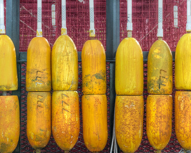 Yellow Buoys 3245