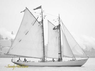 The schooner Bowdoin.