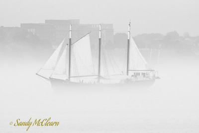 "Tour boat ""Silva"" in the fog"