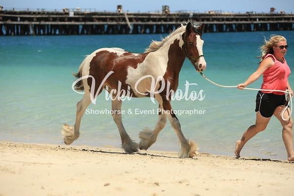 Naval Base Horse Beach  -  2016