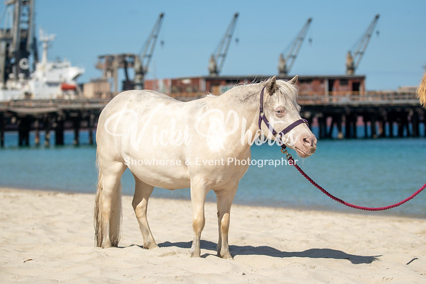 Naval Base Horse Beach 2020