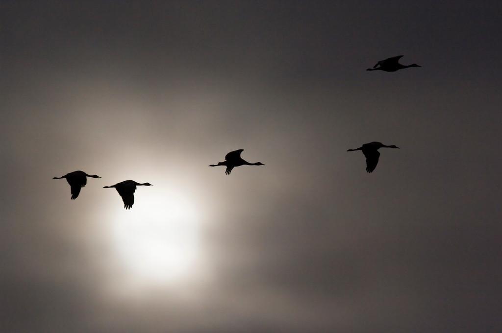 airborne silhouettes...