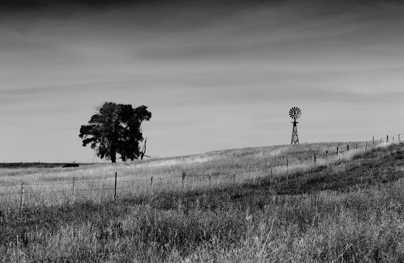 Tree and Windmill, Sheridan County, NE