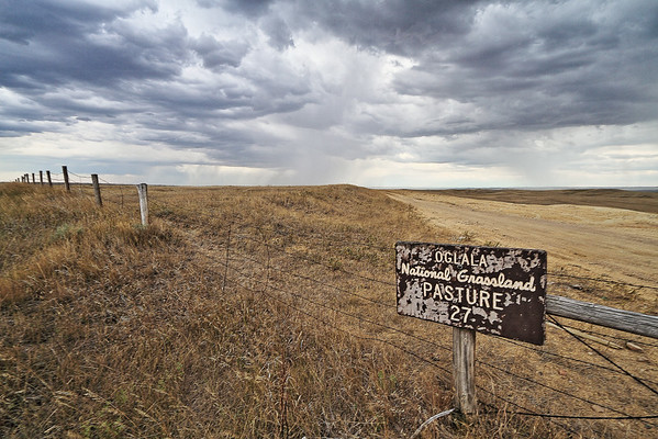 Pasture 27 in the Oglala National Grasslands