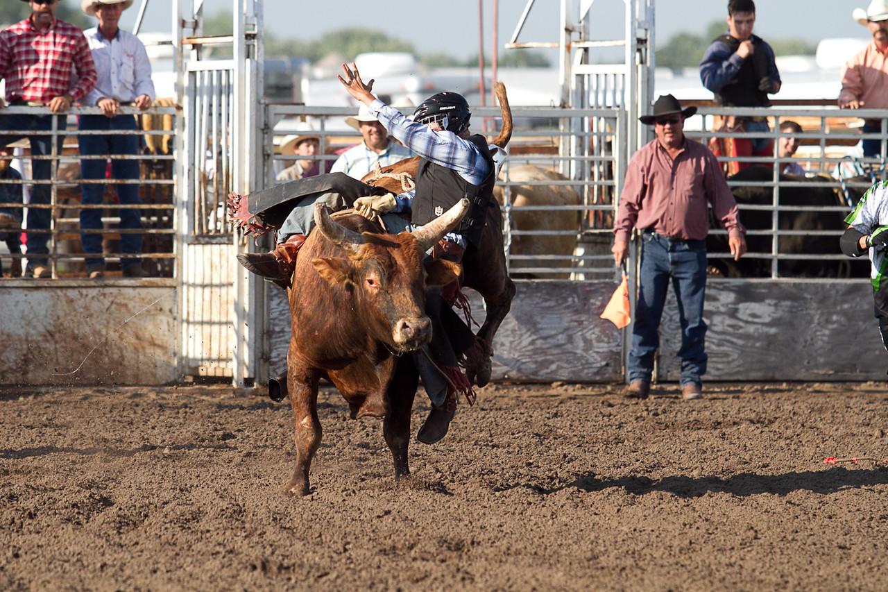 bull-1658