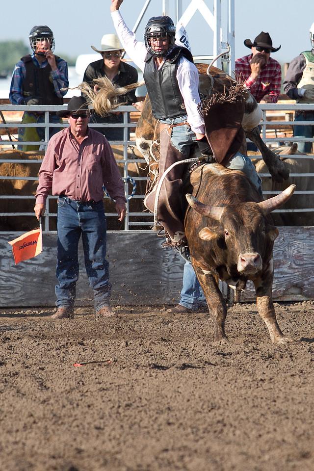 bull-1693