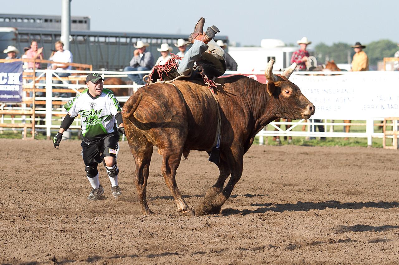 bull-1665