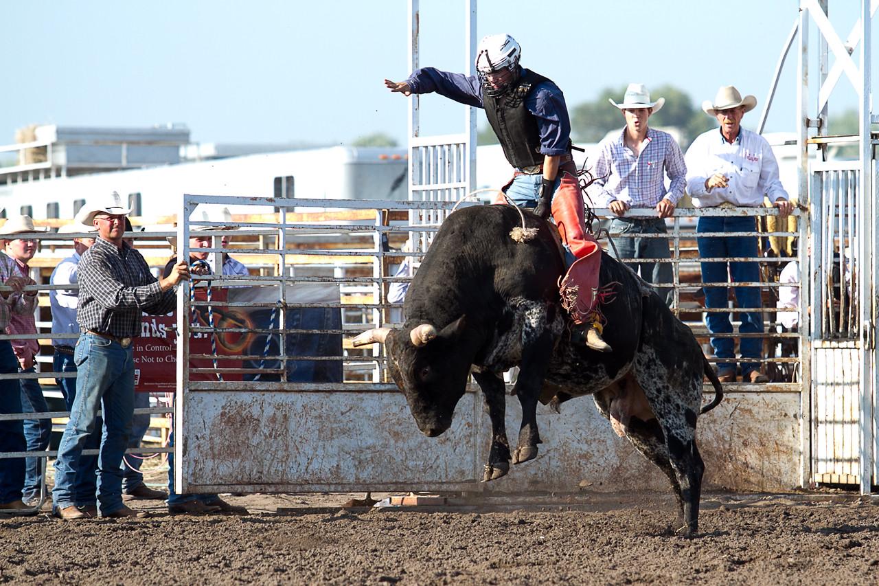 bull-1680