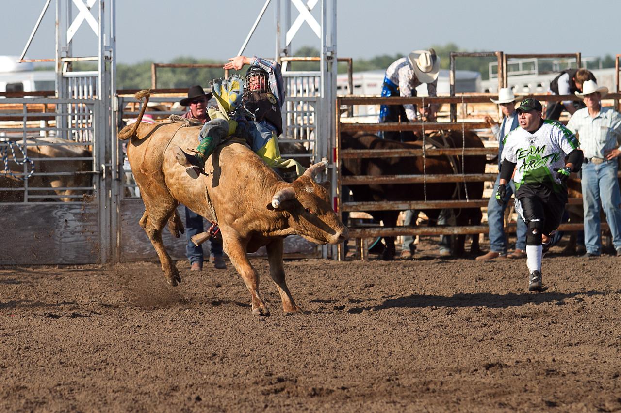 bull-1723