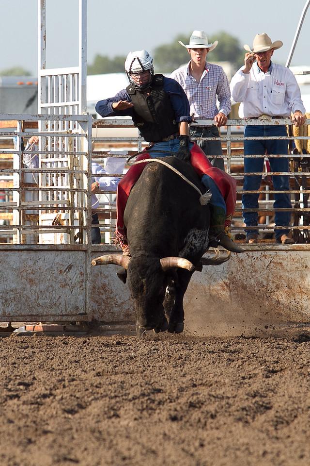 bull-1678