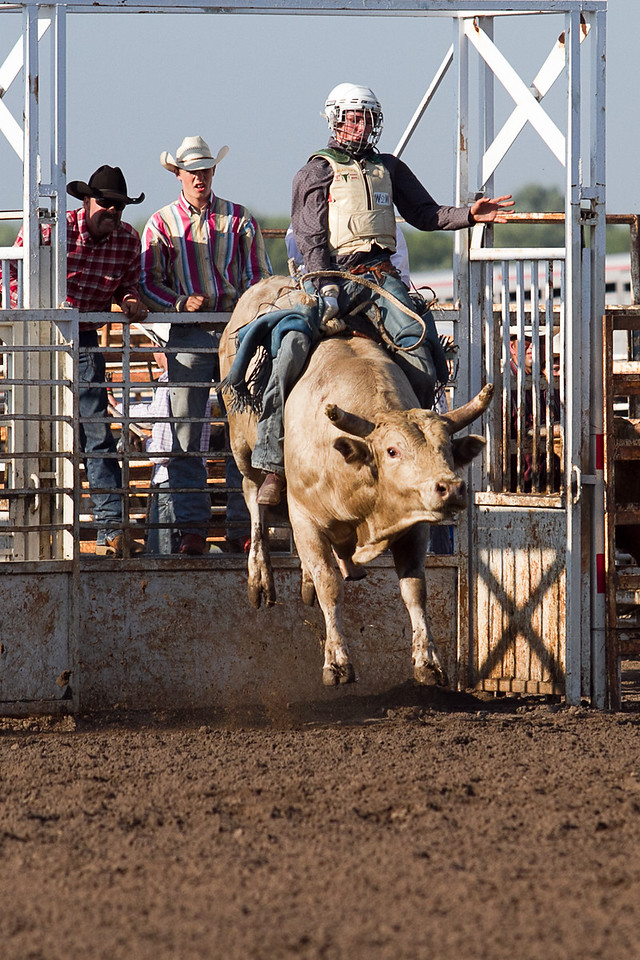 bull-1703