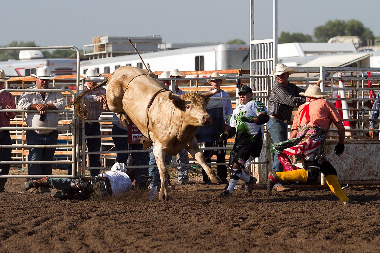 bull-1676