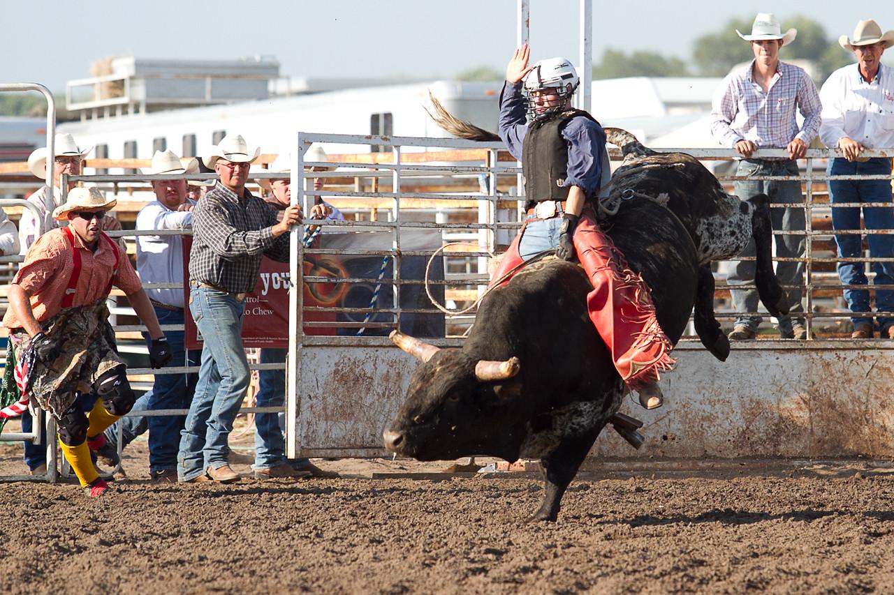 bull-1681