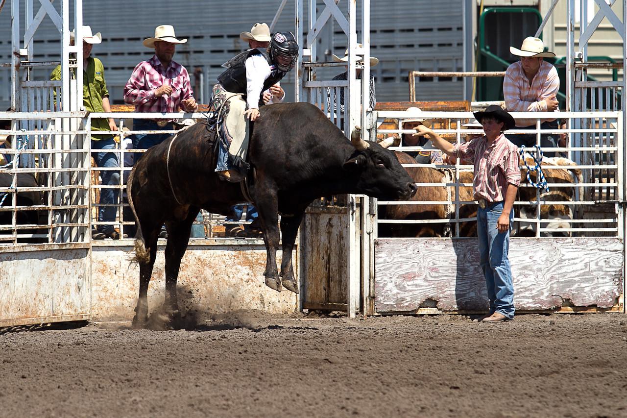 bull-3186