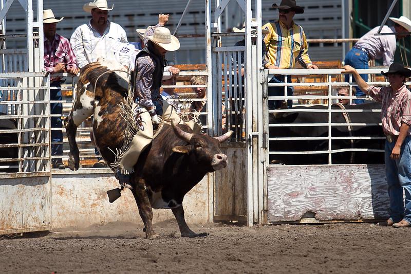 bull-3206