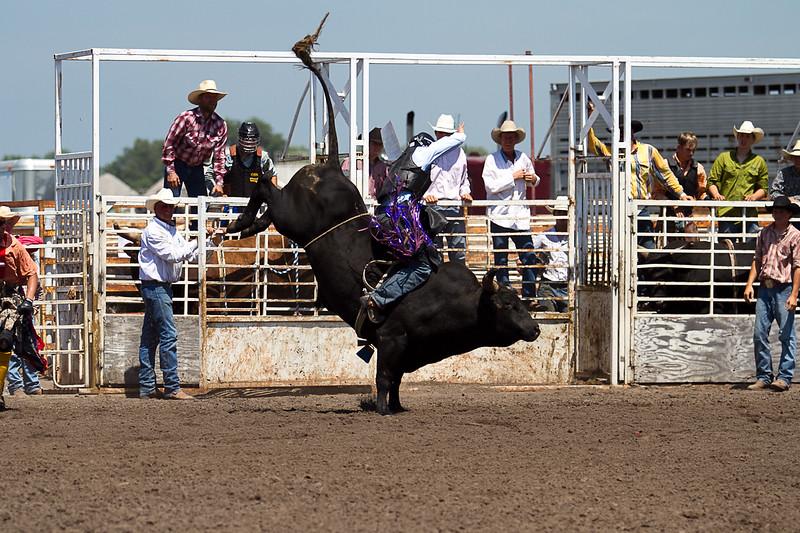 bull-3223