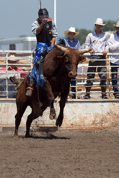 bull-3230