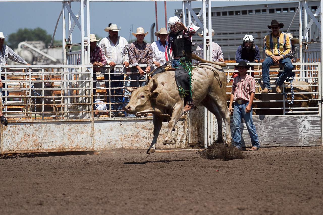 bull-3267