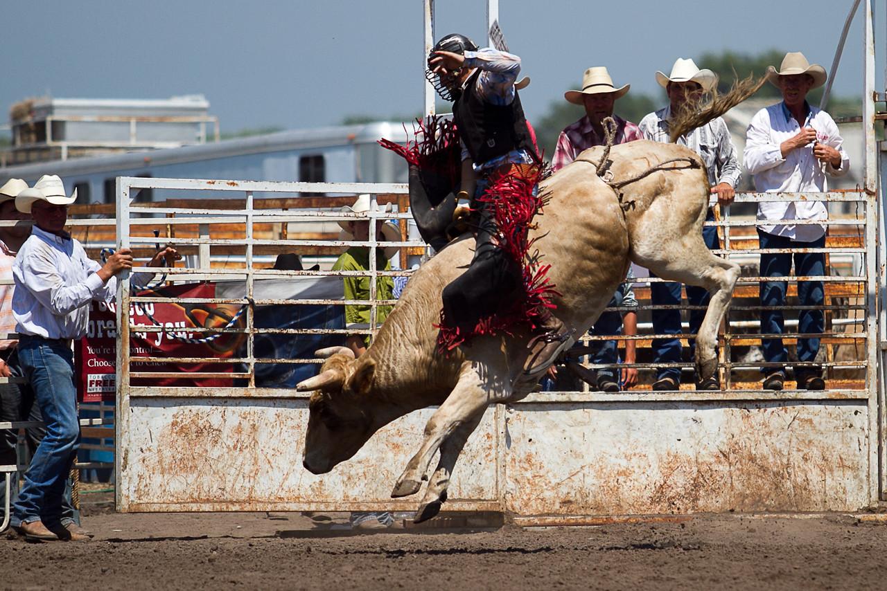 bull-3257
