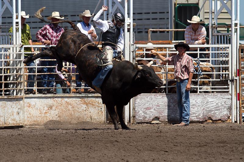 bull-3187
