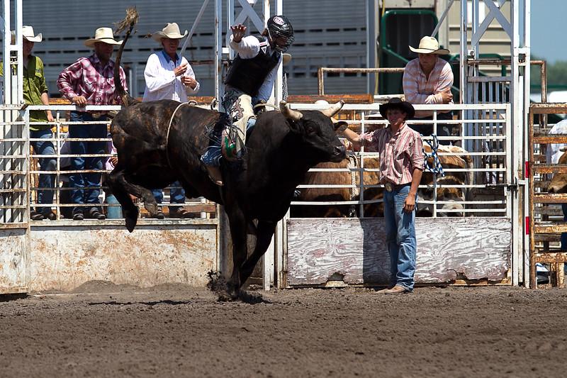 bull-3188