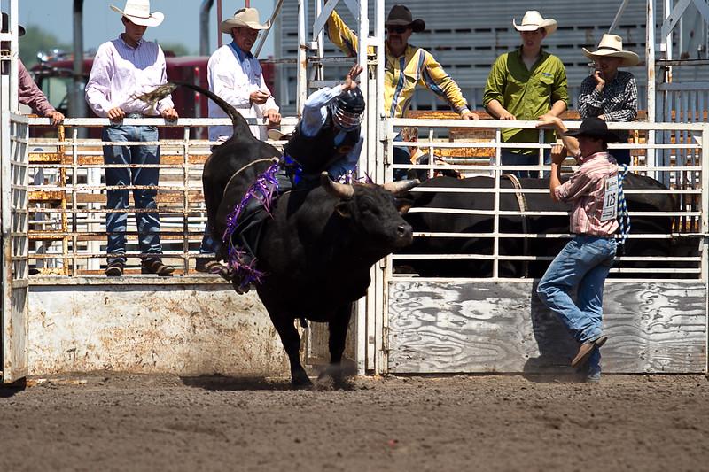 bull-3215