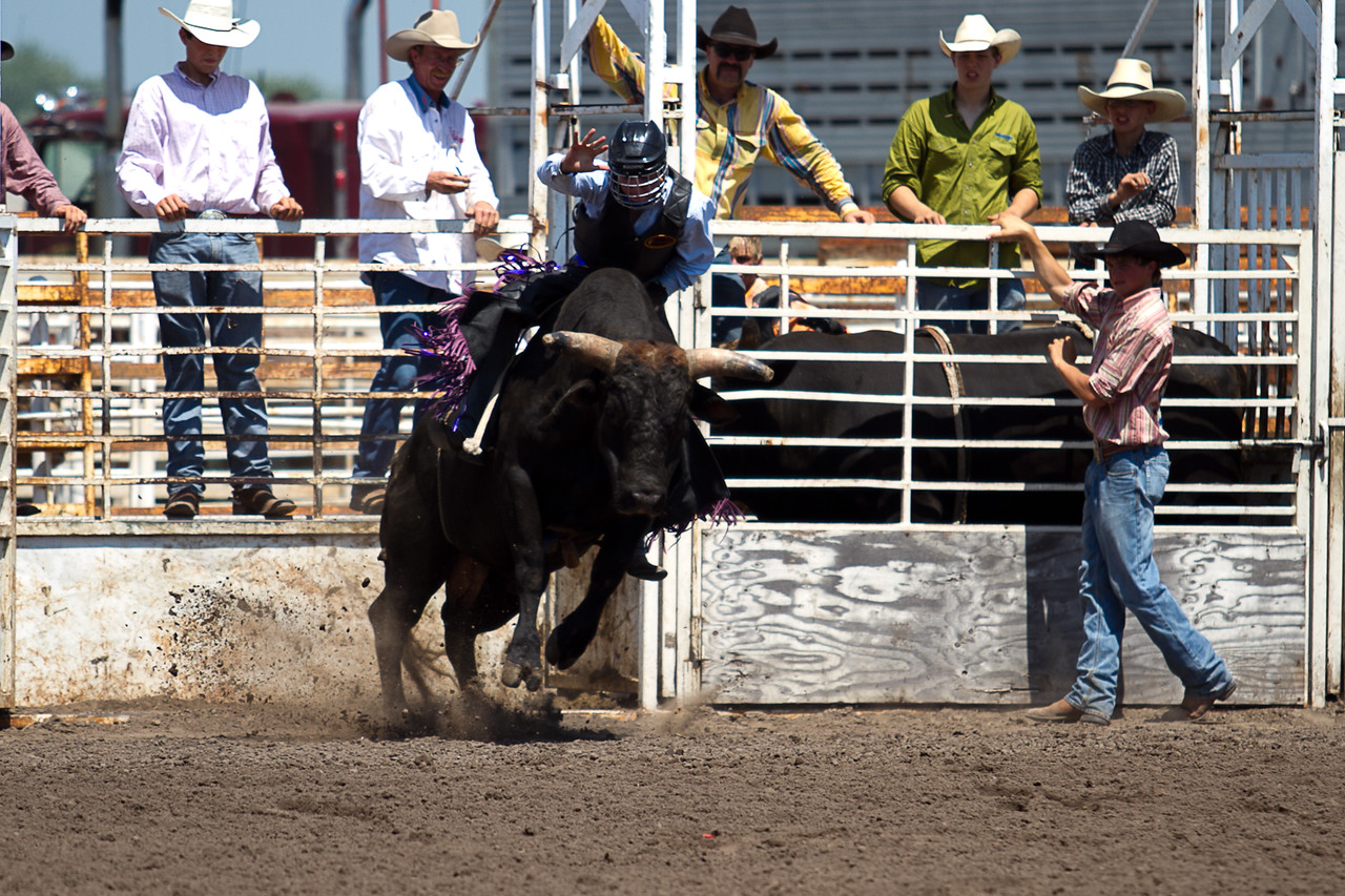 bull-3217
