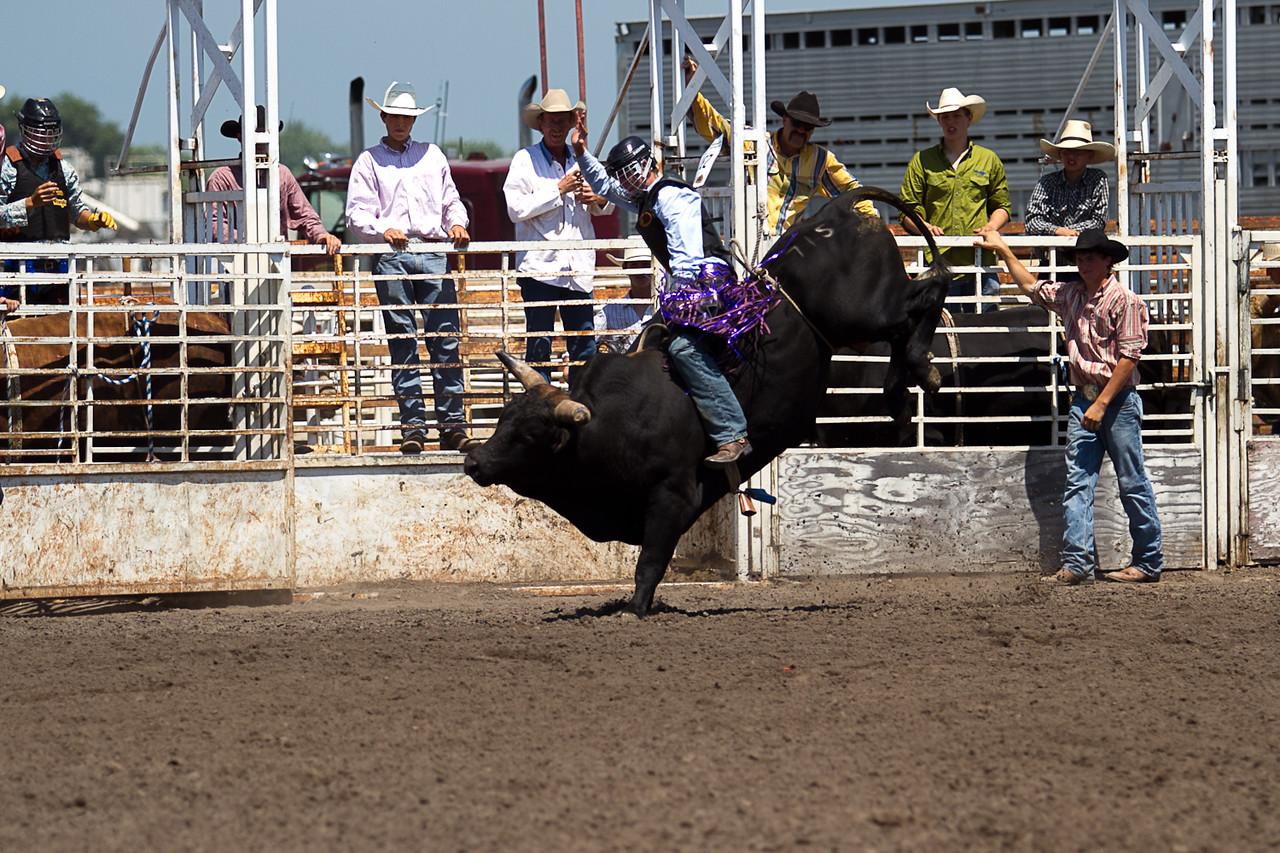 bull-3219