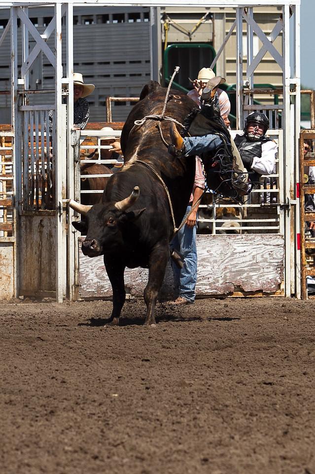 bull-3191