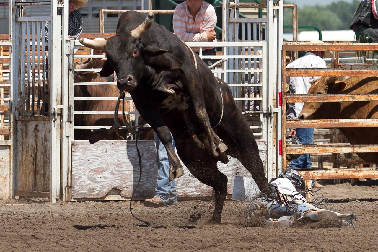 bull-3193