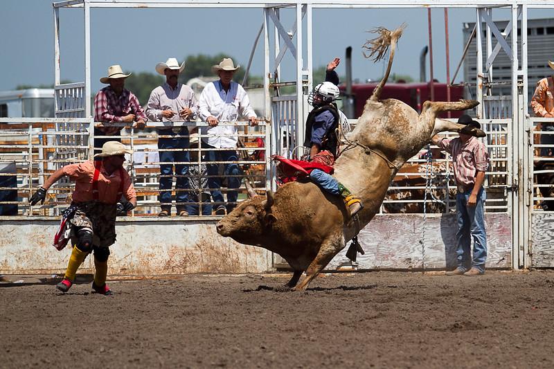 bull-3278