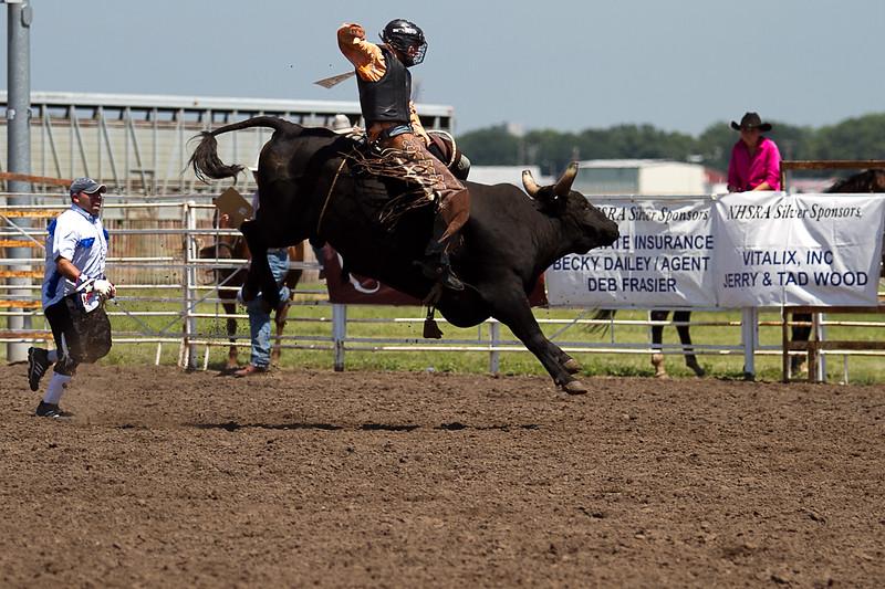 bull-3254