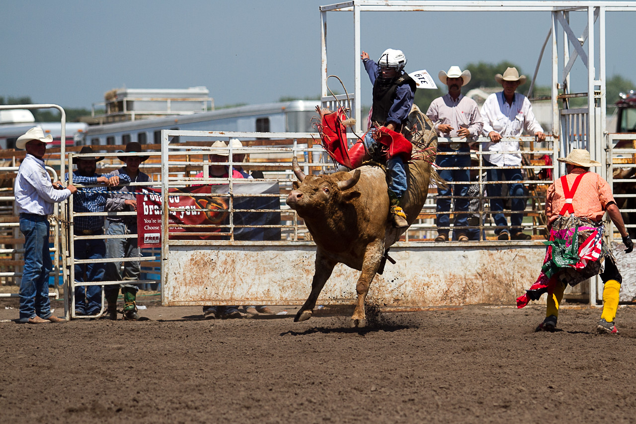 bull-3279