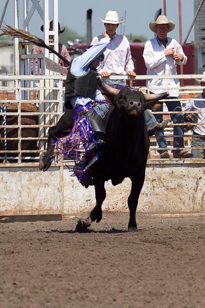 bull-3222