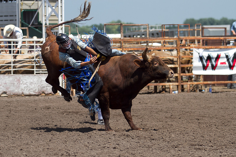 bull-3236