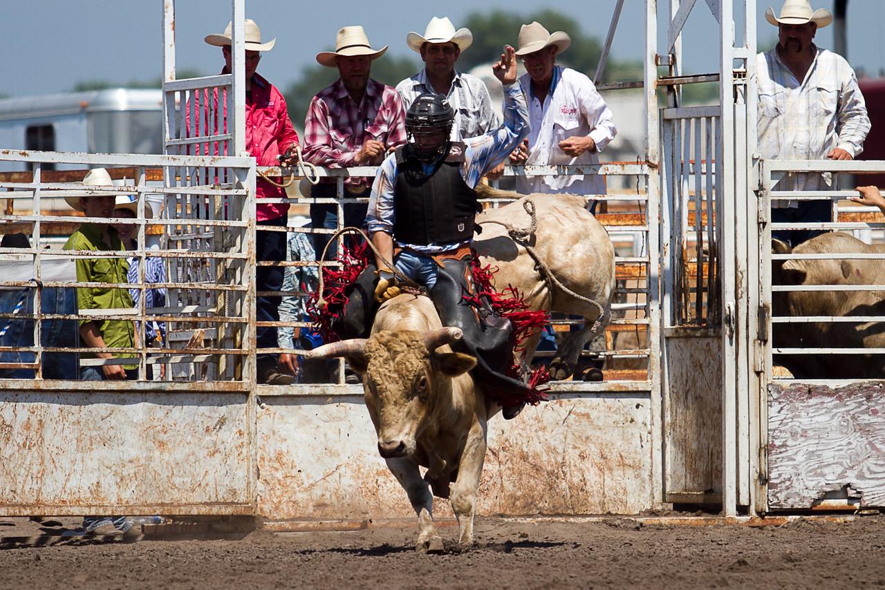 bull-3255