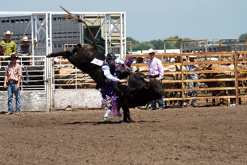 bull-3226