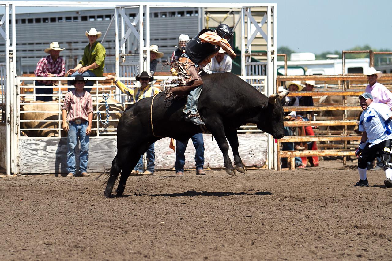 bull-3251
