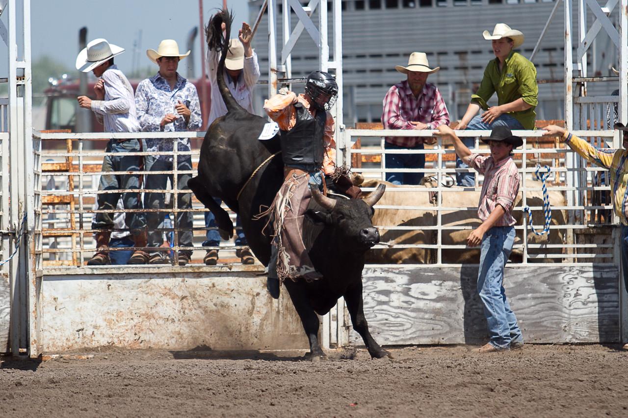 bull-3246