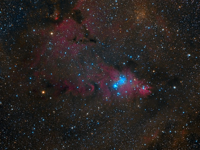 The Christmas Tree Cluster - NGC 2264