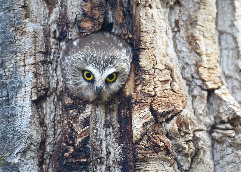 eyes of the tree